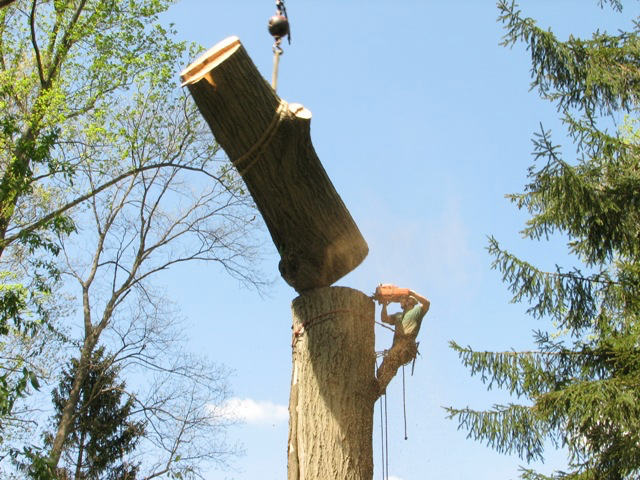 Tree trunk removal cutting